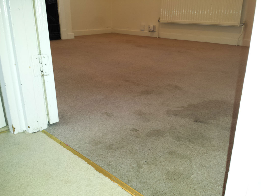 Carpet Cleaning Service Before